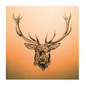 RD02-17 RED DEER (CERVUS ELAPHUS)