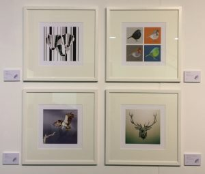 Wildlife prints White frames