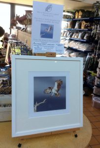 Win this framed Osprey print