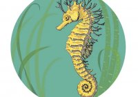 SH0F-18 LONG-SNOUTED SEA HORSE