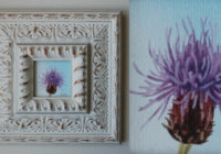 Creeping thistle painting