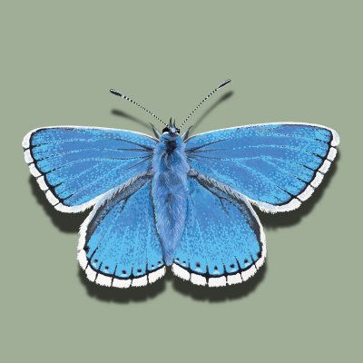 AB0F-15 ADONIS BLUE BUTTERFLY