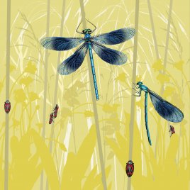 BF0F-15 BANDED DEMOISELLES with FROGHOPPERS