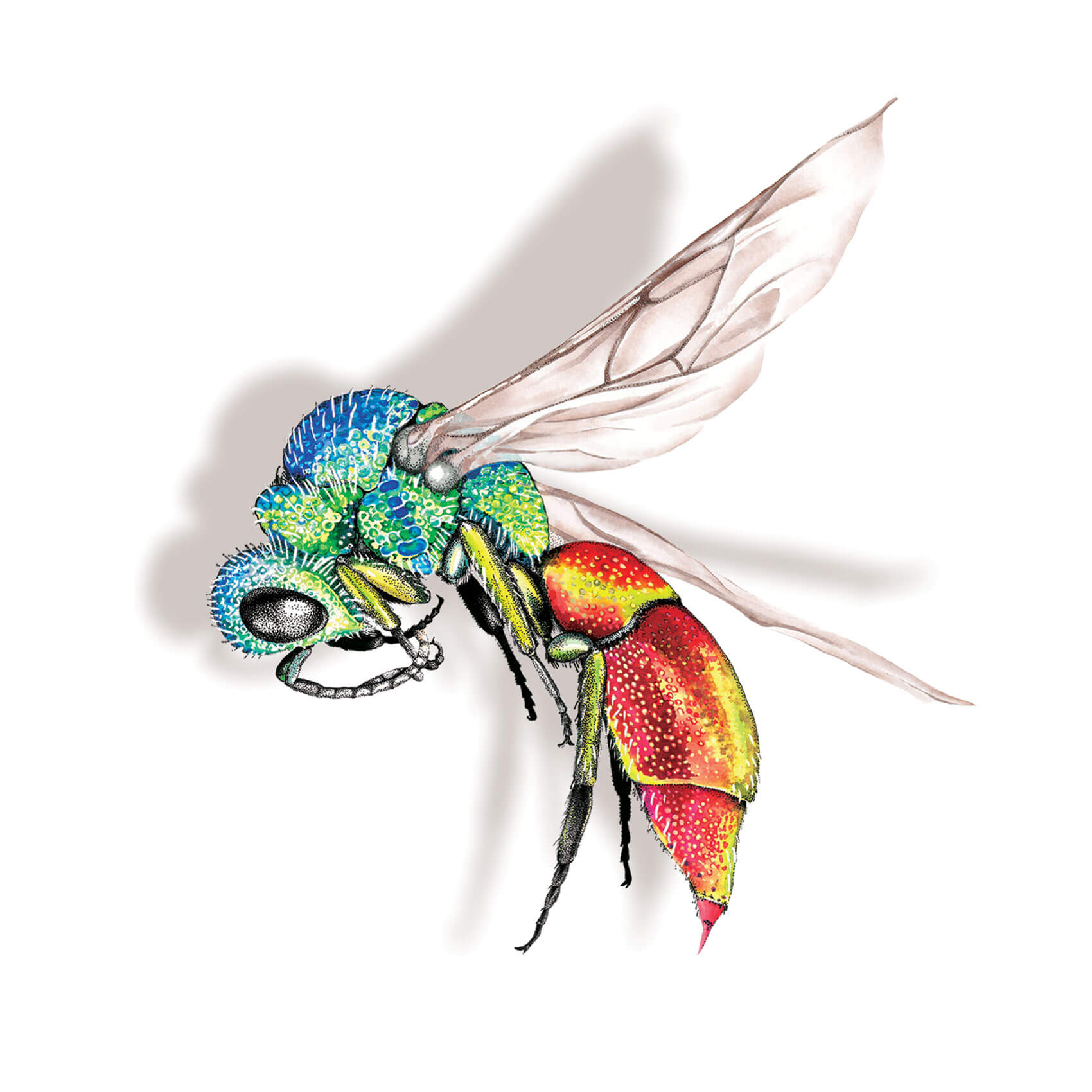 Ruby Tailed Wasp Bespoke Folk