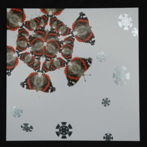 XSRF-15 RED ADMIRAL SNOWFLAKES
