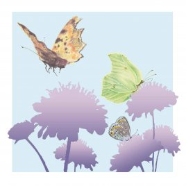 BU00-14 COMMA, BRIMSTONE AND COMMON BLUE
