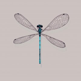 DF00-13 DAMSELFLY