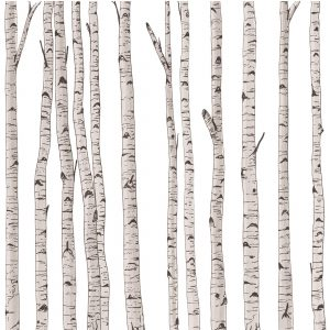 PBI00-16 BIRCH TREES (Print)