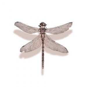 PDR00-16 DRAGONFLY (Print)